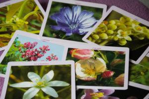 Fleurs de Bach - Brigitte MOREL - Naturopathe - Reflexologue plantaire